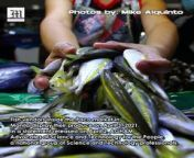 Protecting The PH Fish Industry<br/><br/>Fish vendors inside the Paco market in Manila display their produce on April 3, 2021. In a statement released on April 2, AGHAM - Advocates of Science and Technology for the People, a national group of Science and Technology professionals, warned that territorial disputes could lead to the collapse of the fishing industry. The group of scientists said that Chinese activities in the disputed territories have resulted in the destruction of at least 16,000 hectares of reefs as of 2017. <br/><br/>Photos by Mike Alquinto<br/><br/>Subscribe to The Manila Times Channel - https://tmt.ph/YTSubscribe <br/><br/>Visit our website at https://www.manilatimes.net <br/><br/>Follow us: <br/>Facebook - https://tmt.ph/facebook <br/>Instagram - https://tmt.ph/instagram <br/>Twitter - https://tmt.ph/twitter <br/>DailyMotion - https://tmt.ph/dailymotion <br/><br/>Subscribe to our Digital Edition - https://tmt.ph/digital <br/><br/>Check out our Podcasts: Spotify - https://tmt.ph/spotify <br/>Apple Podcasts - https://tmt.ph/applepodcasts <br/>Amazon Music - https://tmt.ph/amazonmusic <br/>Deezer: https://tmt.ph/deezer <br/>Stitcher: https://tmt.ph/stitcher<br/>Tune In: https://tmt.ph/tunein<br/>Soundcloud: https://tmt.ph/soundcloud <br/><br/>#TheManilaTimes